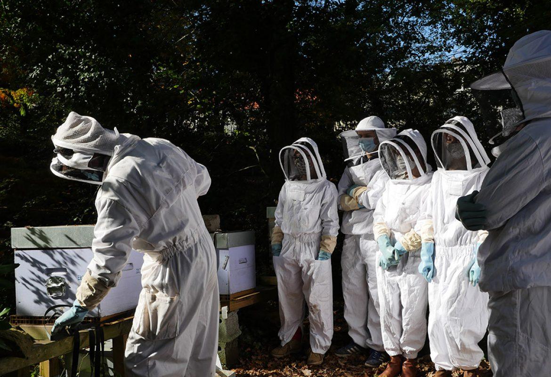 blanche-de-castille-lycee-general-technologique-apiculture