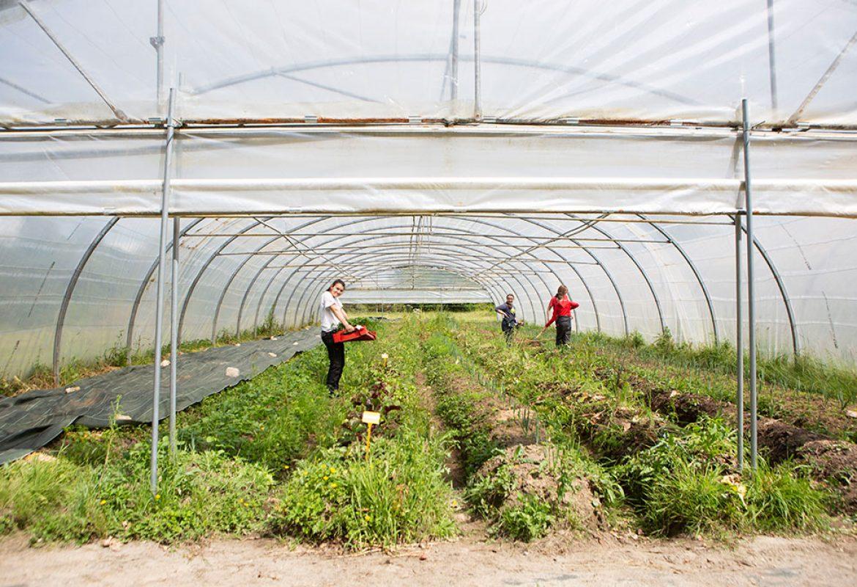 daniel-brottier-lycee-agricole